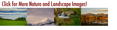LandscapeBanner